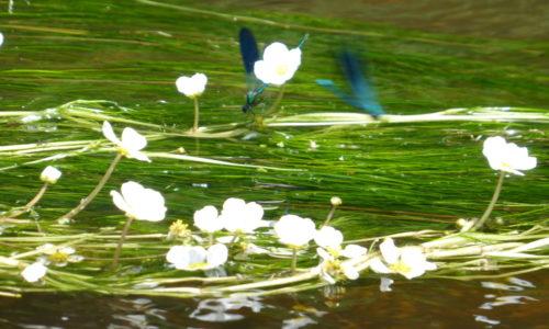 Rivière Faune et Flore sur la Vézère au Camping Le Paradis