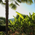 Camping Le Paradis - Blog La nature s'éveille -Palmiers